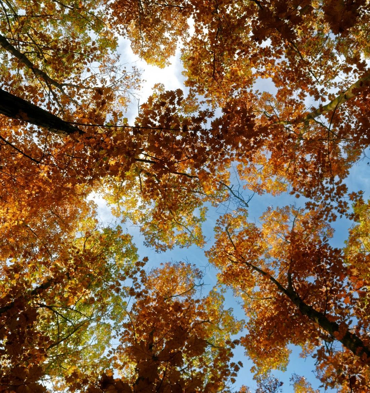 Bäume Sicht von unten nach oben in den blauen Himmel